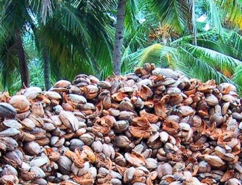 ¿Cultivar en fibra de coco es hidroponía?
