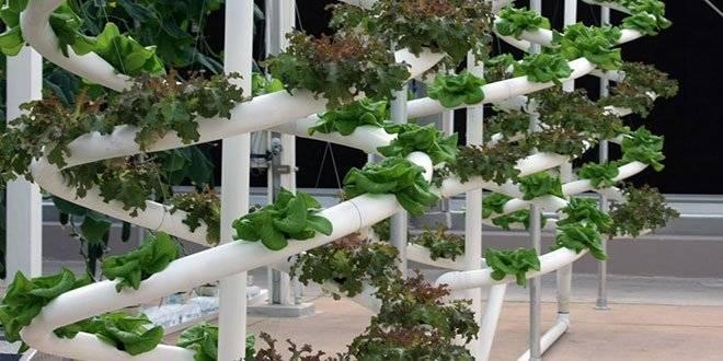 Which Is The Best Hydroponic System For Me?