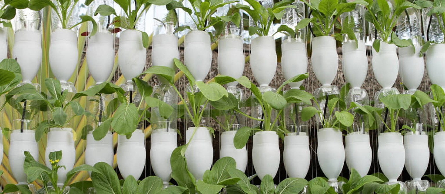 the usefulness of hydroponics in plant production