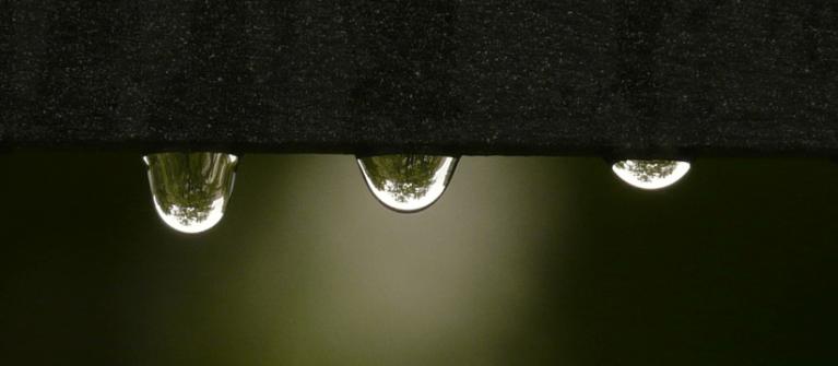 water hydroponics