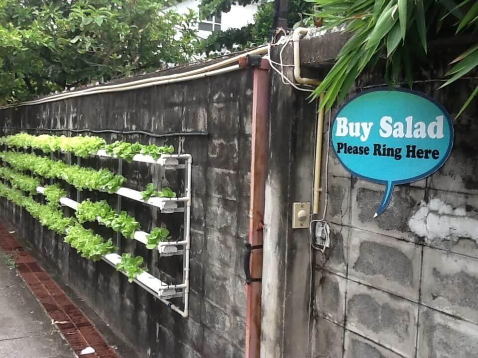 buy_salad