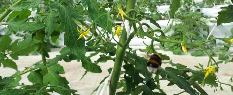 ecosystem bee